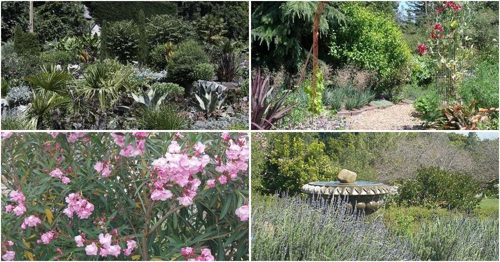 cómo crear espectaculares jardines de secano | macetas | pinterest