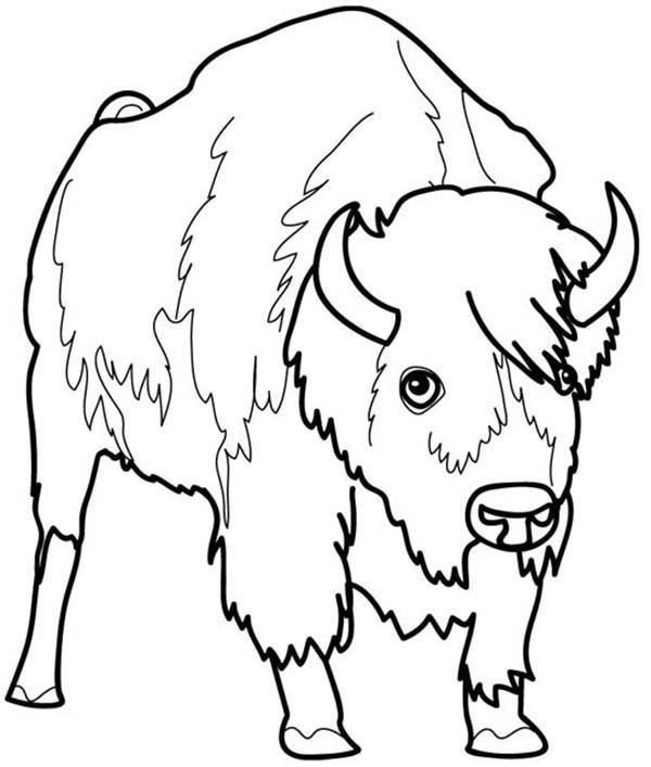 Bison Picture of a Bison Coloring Page 4 Kids Coloring Pages
