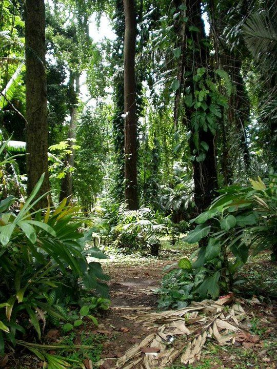 Bogor Botanical Gardens, Java Barat Indonesia, Tempat