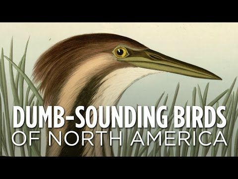 Dumb-Sounding Birds Of North America - YouTube