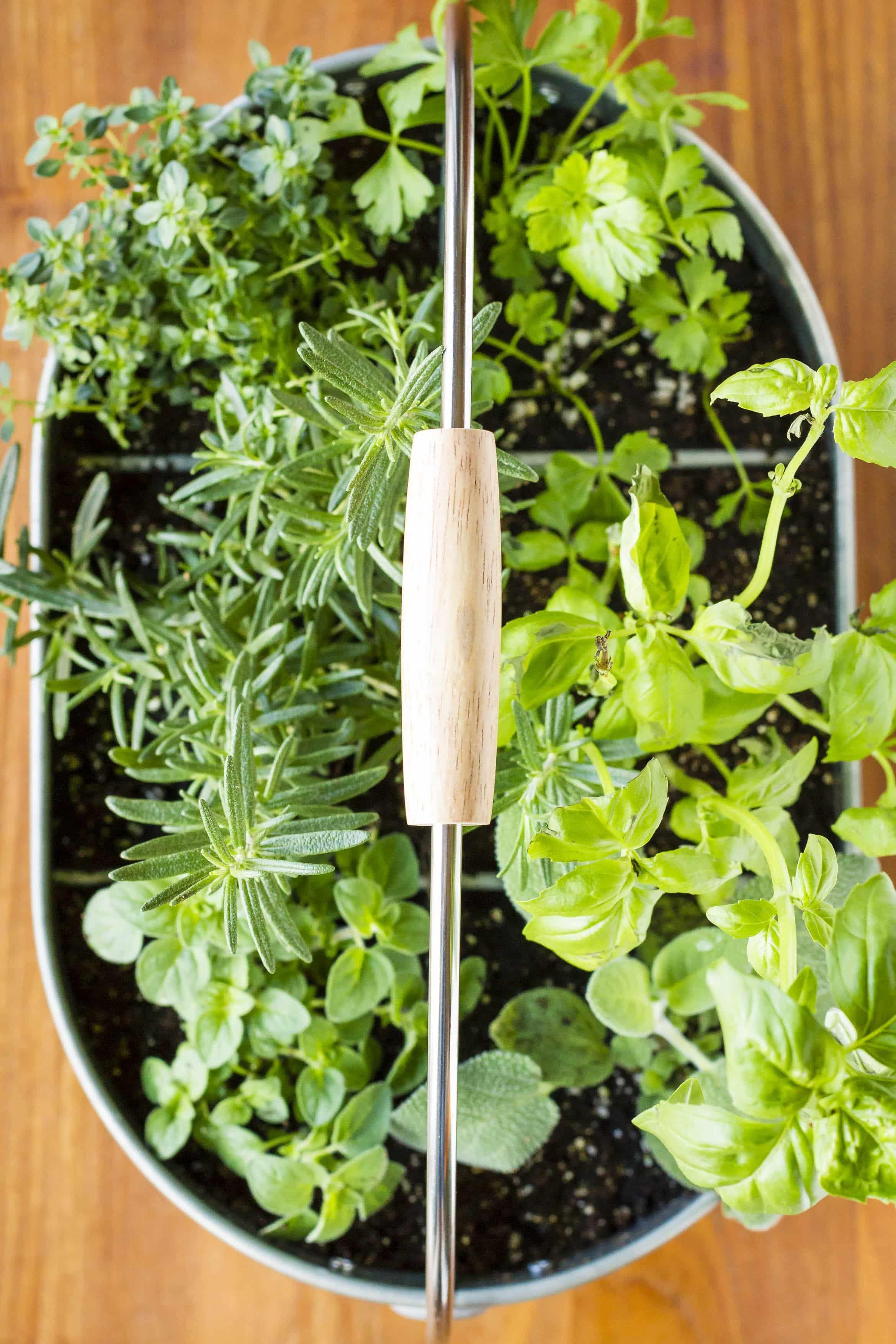 32 Ways To Create The Best Indoor Herb Garden Container 640 x 480