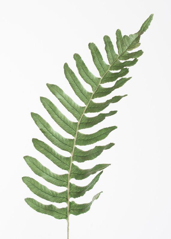 Green fern, photoart print/poster, 50x70cm (19,7x27,6inches)