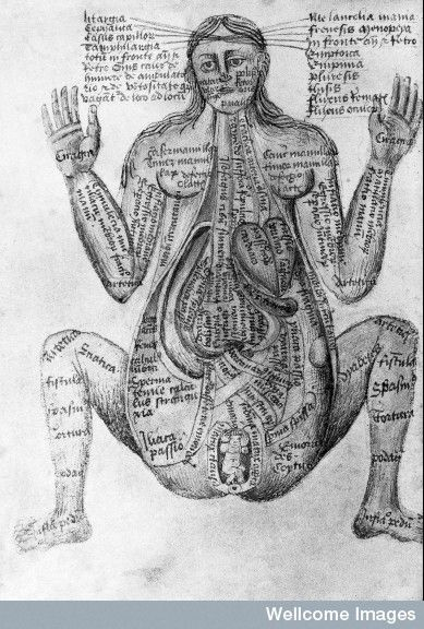 "15th century illustrations of the human body from ""Claudius Pseudo-Galen"""