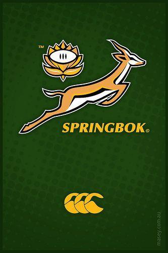 Springbok Springbok Rugby Rugby Logo Rugby Wallpaper