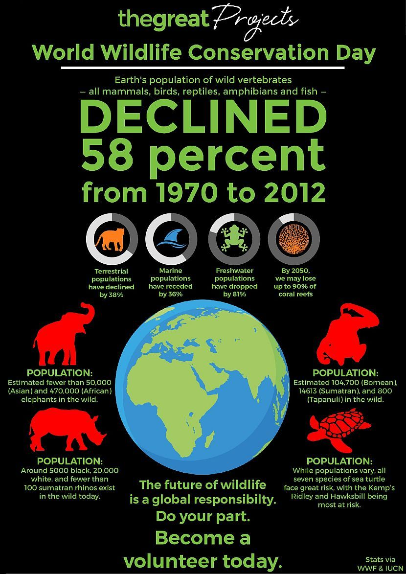 World Wildlife Conservation Day The Great Projects in
