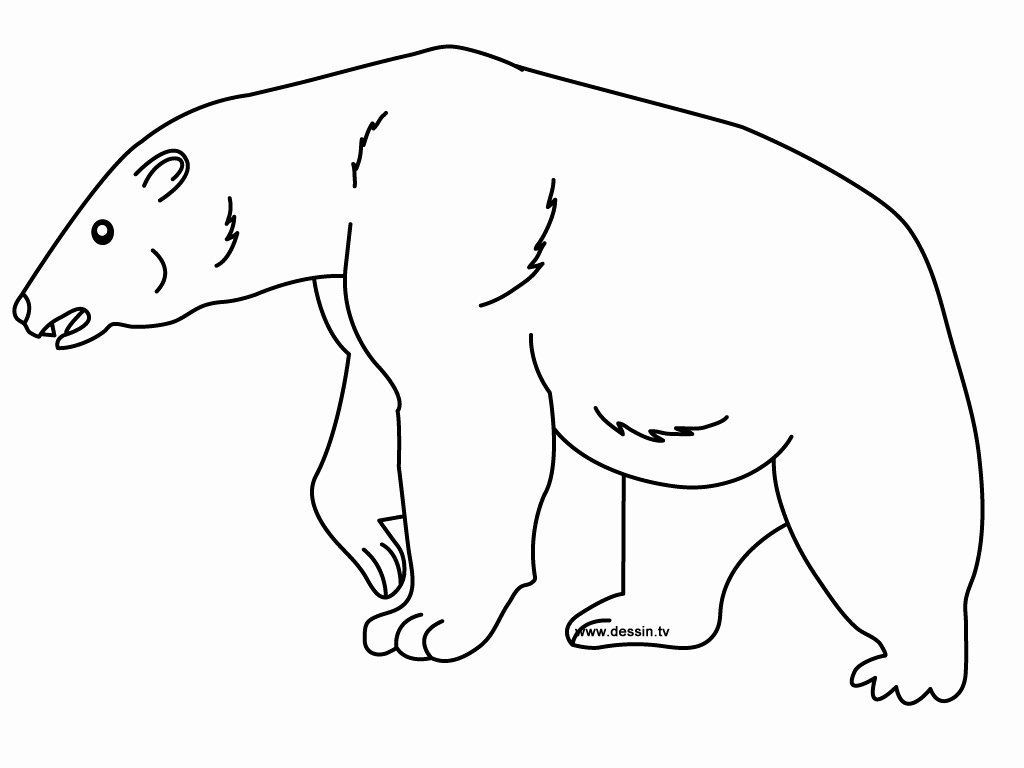 Polar Bear Coloring Page Best Of Coloring Polar Bear Bear Coloring Pages Polar Bear Coloring Page Coloring Pages