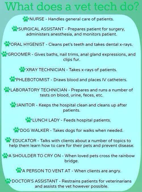 What vet techs do Vet tech comedy Pinterest Tech, Veterinary - vet tech job description