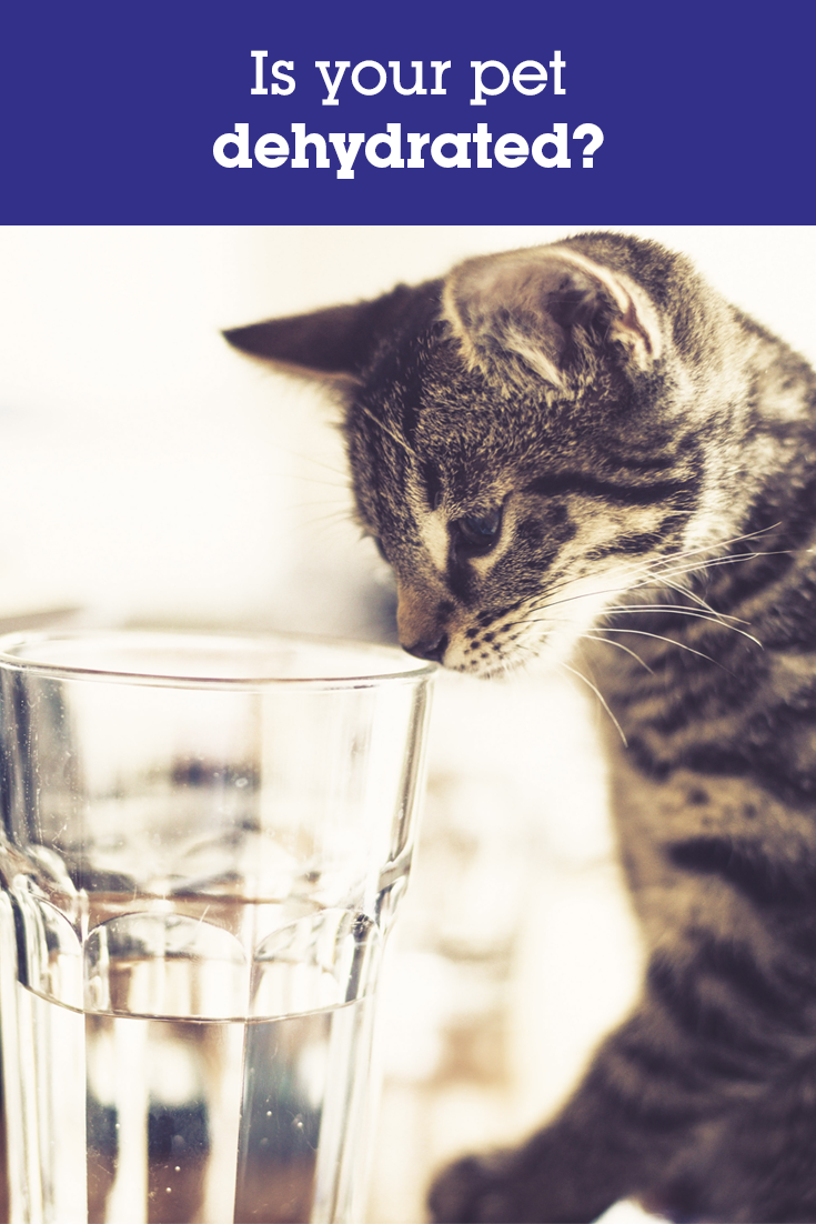Cat & Dog Dehydration Pets, Cats, Dogs