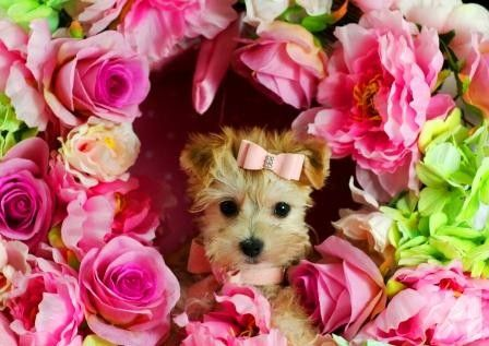 Pictures Of Super Tiny Farm Animals Tiny Puppies Super Small