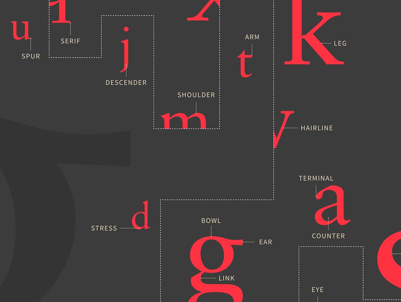 Type Anatomy Poster On Behance