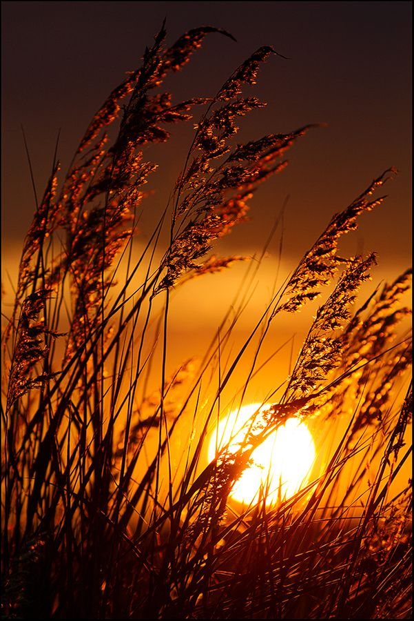 I Like It Wild And Attractive Always In The Country Http Samissomarspace Wordpress Com Nature Photography Nature Pictures Sunset Photography
