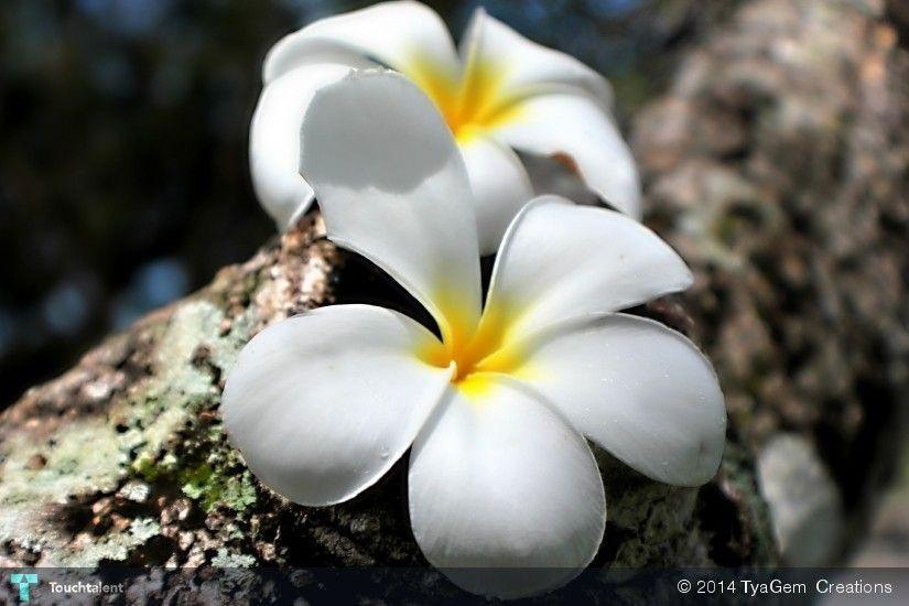 Beauty #Creative #Art #Photography @Touchtalent.com
