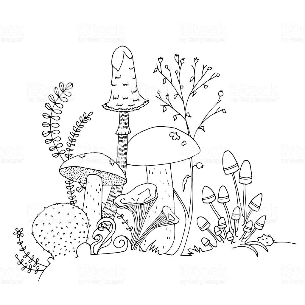 Various Hand Drawn Edible Mushrooms Fungi Ferns Flowers Stems