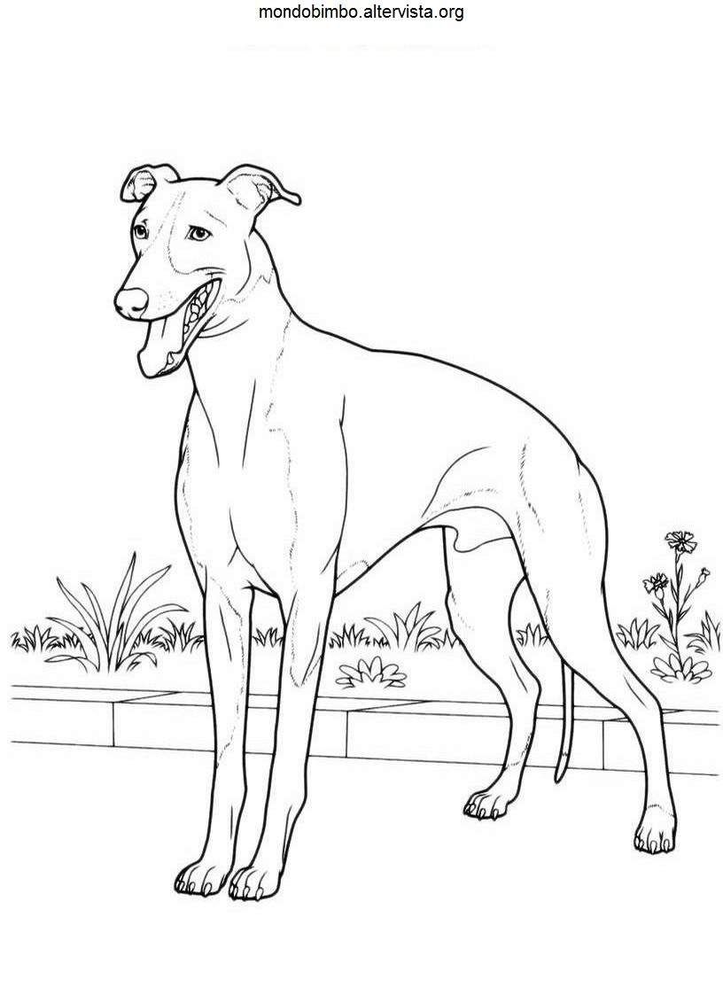 Disegno Colorare Cani Uno Jpg 816 1123 Dog Coloring Page Horse Coloring Pages Dog Line Art