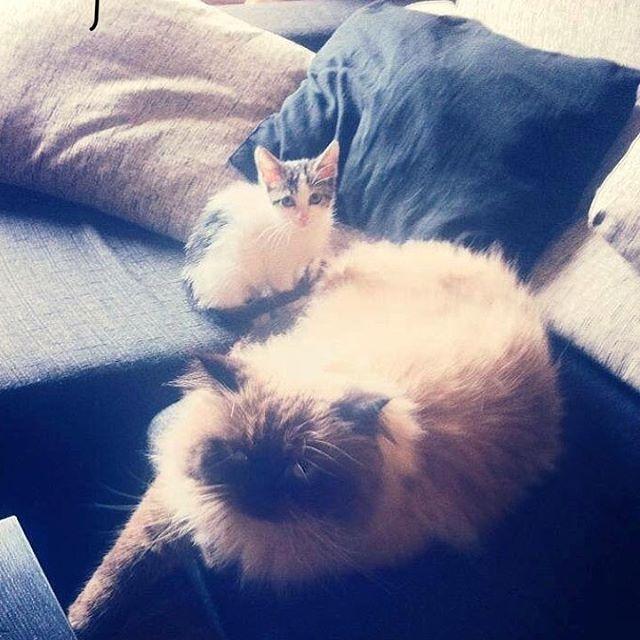 Reposting @axlcasero_thepersian: Mi buen amigo Mini 😻 . . . . #furrfriends #catsfriends #catslover #2cats #persiancat #persiancatsofinstagram #catsofinstagram #cats_of_day #cats_of_world #cats_of_instagram #cats #catstagram #catslife  #gatos #gatosdeinstagram #gatospersas #kittylove #kitten #kittensofig #meow