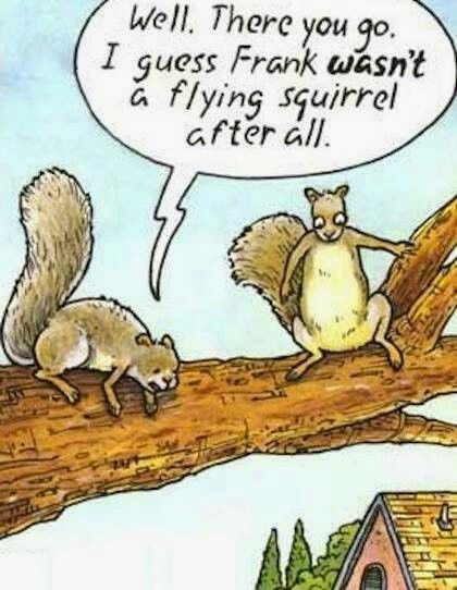 Well There You Go I Guess Frank Wasn T A Flying Squirrel After All Funny Cartoons Jokes Cartoon Jokes Funny Cartoon Pictures