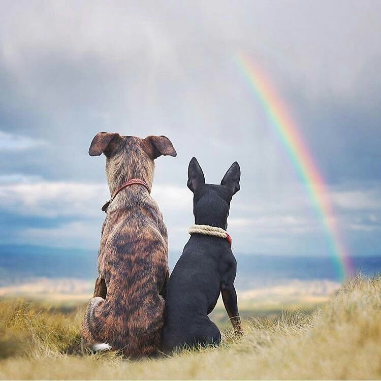 Dog Pals Under The Rainbow Pets Pinterest Dogs Puppies And
