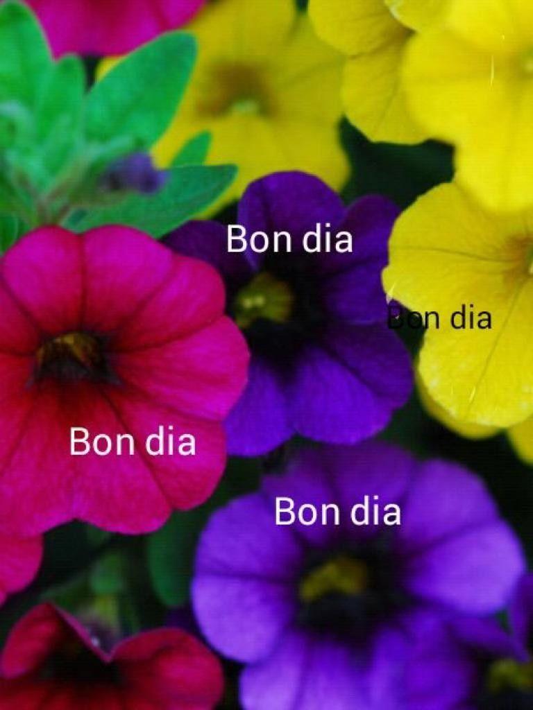 Pin De Dolors Blancafort En Imatges De Bon Dia Frases De Buenos Días Frases De Buenos Frases De La Mañana
