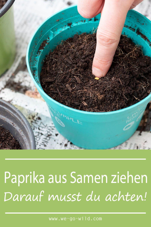 Paprika selber ziehen aus Samenkörnern - WE GO WILD #howtogrowvegetables