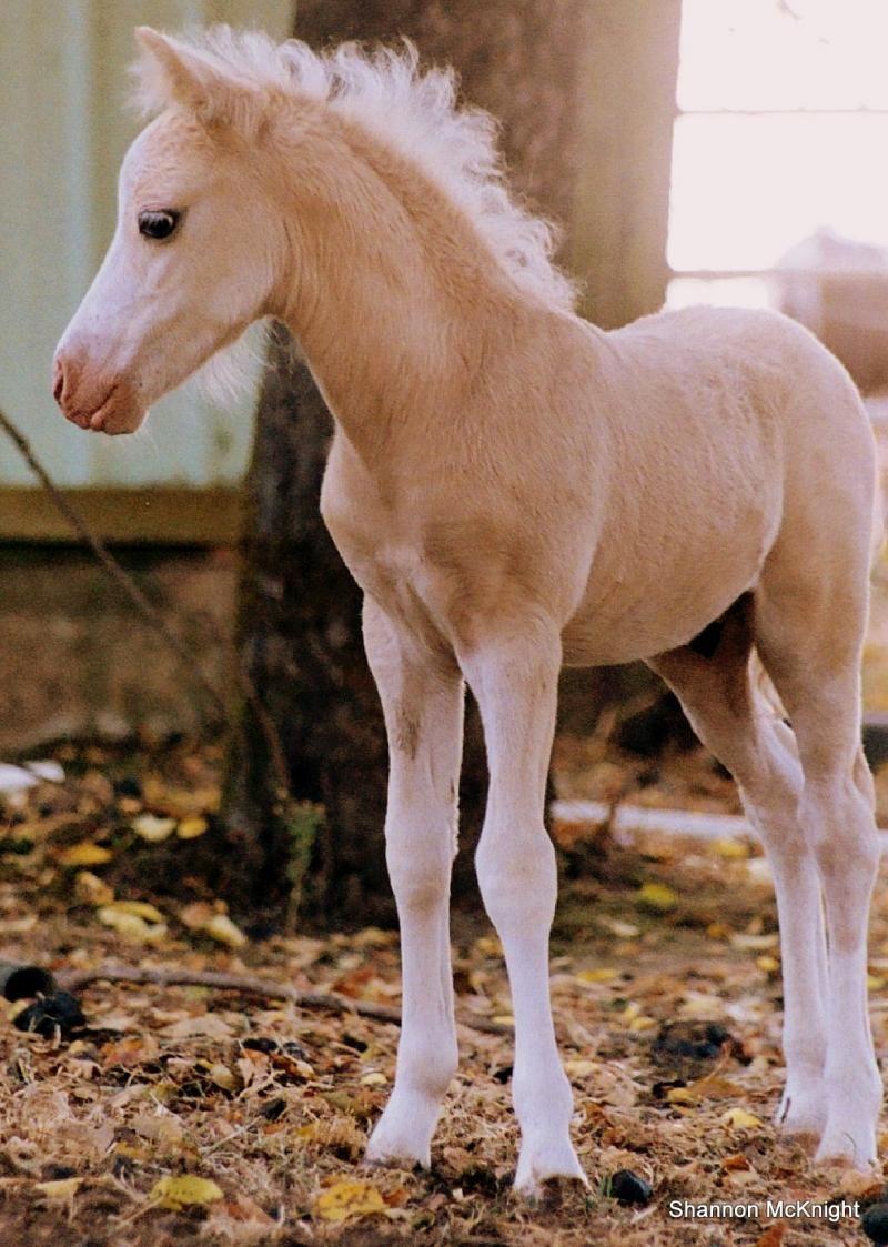 Apacheblu Ranch Pretty Horses Barnyard Animals Foals