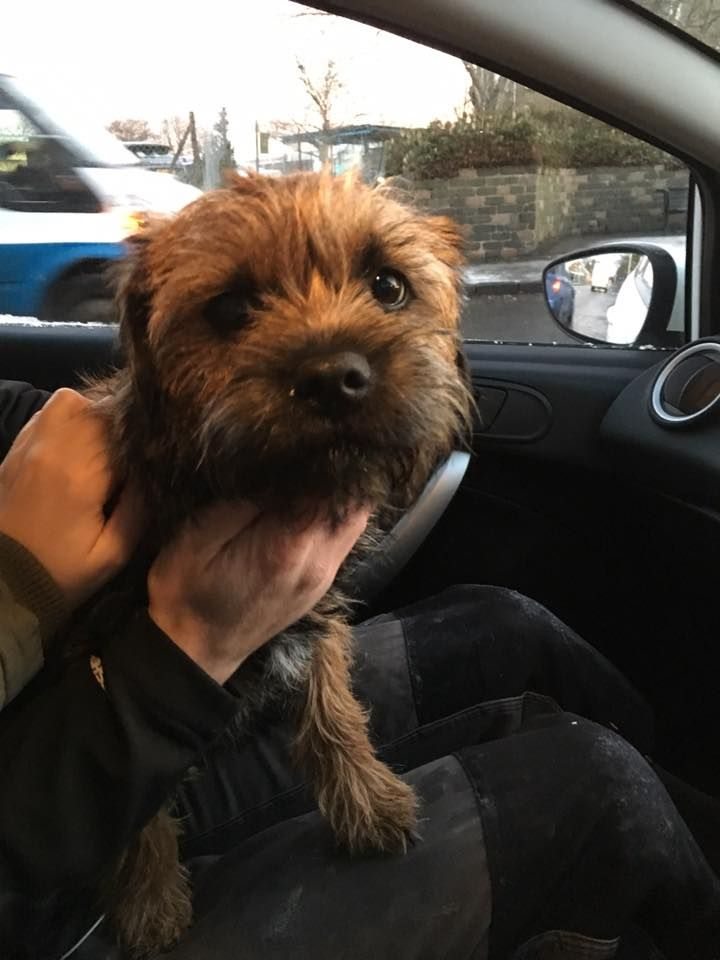 I Ve Just Found This Dog On Byron Street Dundee While I Was Walking To Work 24 X2f 11 X2f 16 It S Safe With Me And I M Going To Take T Dogs Dundee Street