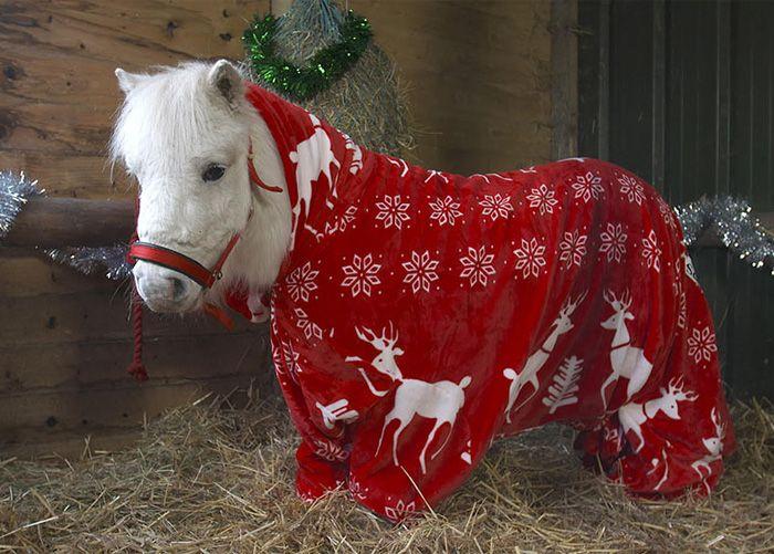 Foursie New Festive Onesie For Ponies To Keep Them Warm Onesie - 22 adorable animals wearing miniature sweaters