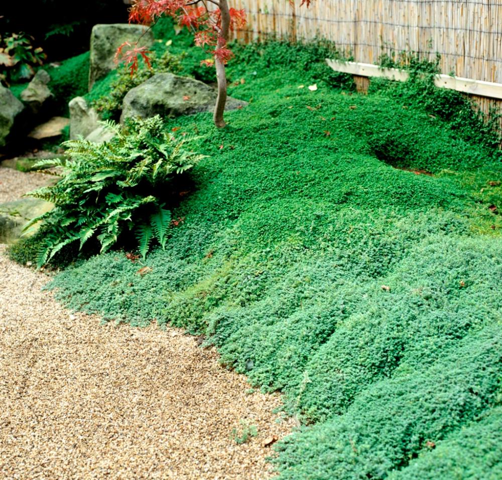 ELIXINE – Recherche Google  Jardin japonais, Amenagement jardin