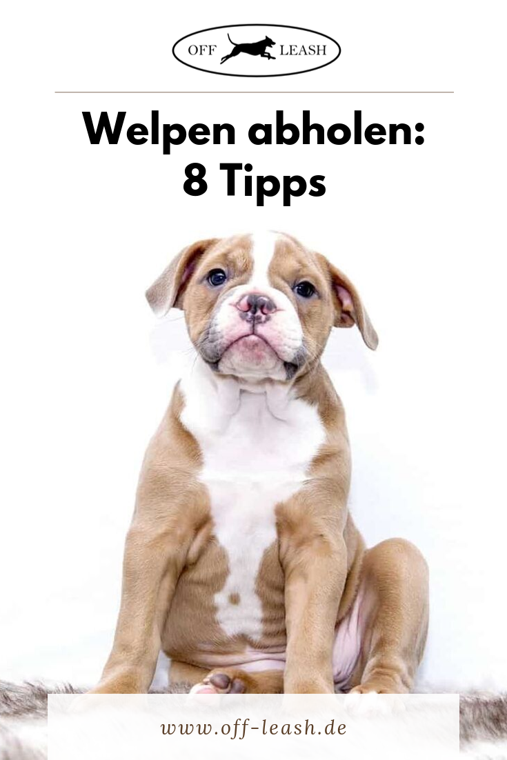Den Welpen Abholen Checkliste Welpen Hunde Welpen Erziehung Hundehaltung