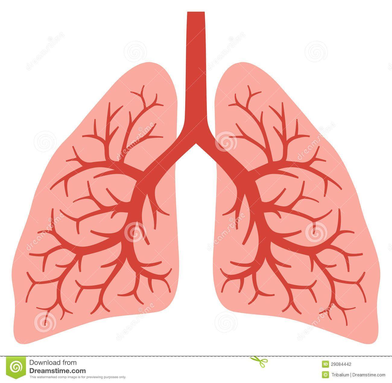Cartoon Human Lungs