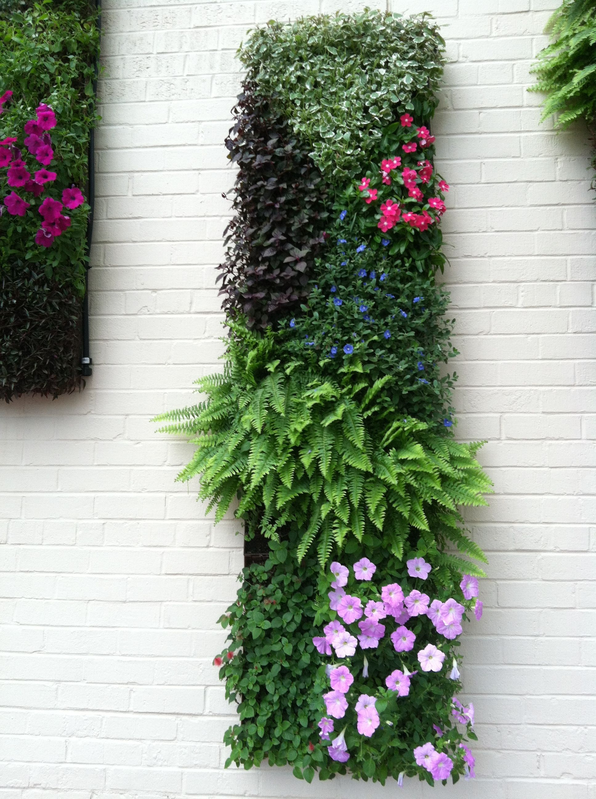 Decorating : Nice Looking Hanging Vertical Garden With Green Plants ...