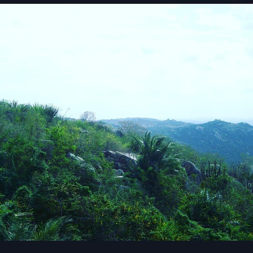 #montedasgameleiras #rn#brasil#picoftheday#love#instagood#photooftheday#landscape#serras#instadaily#nature#instalike#bestoftheday#sky#photo#instamood#riograndedonorte