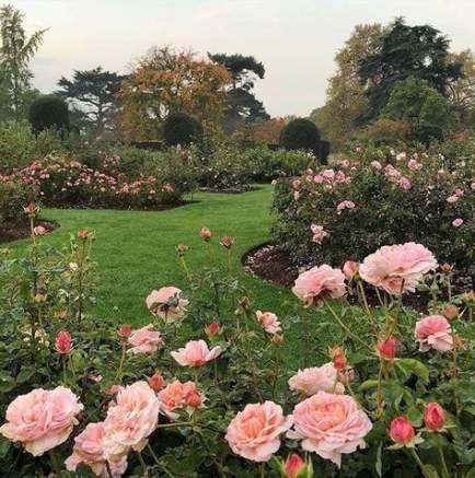 Photo of 15+  ideas for garden aesthetic sunny,  #aesthetic #garden #gardenaesthetic #ideas #sunny