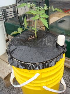 Green Roof Growers: New Wicking Strategy for Sub-Irrigated Planters