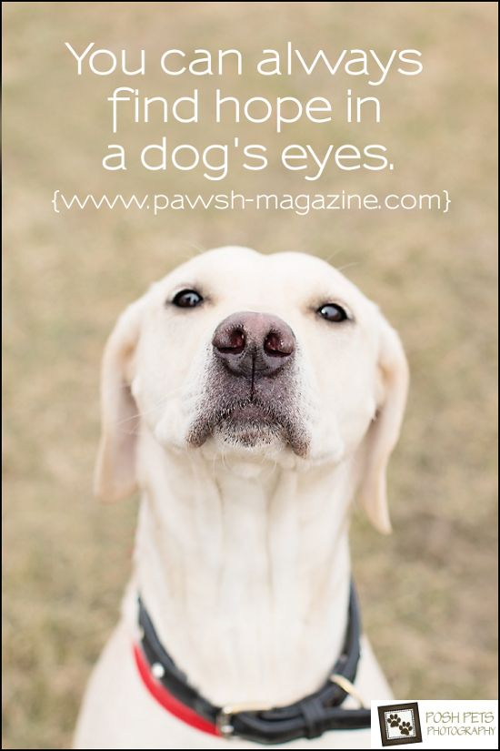 You Can Always Find Hope In A Dogs Eyes Dogphotography Rescue