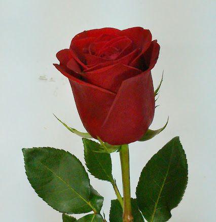 Pin En La Tienda De Las Flores