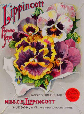 Flower Seeds Miss C H Lippincott Nursery And Seed Catalogs