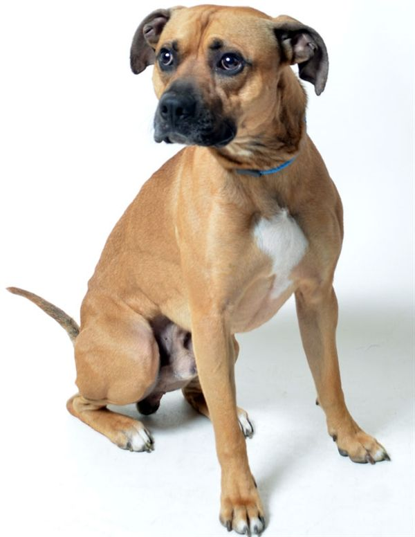Welcome To Web Forms Franklin County Dog Shelter Adoption