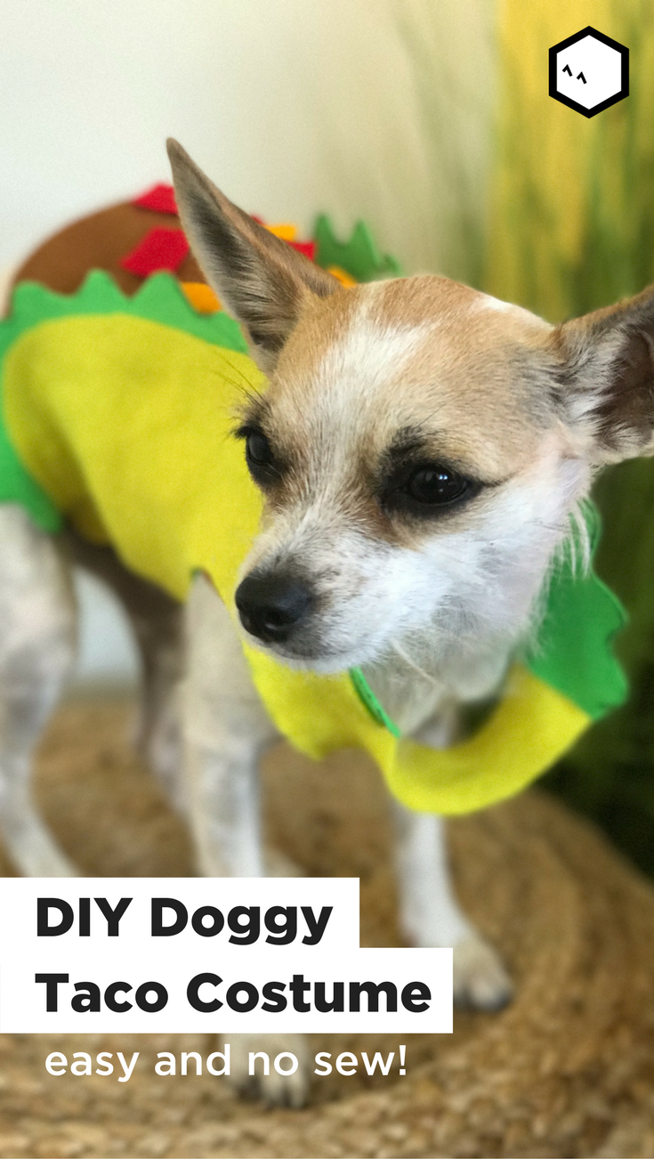 Turn your pup into a taco this year with this easy diy no sew turn your pup into a taco this year with this easy diy no sew costume want to dress your dog up for halloween but dont have a costume solutioingenieria Images