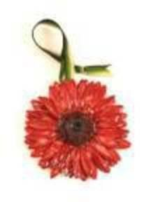 Gerbera Daisy - Real Flower Ornament