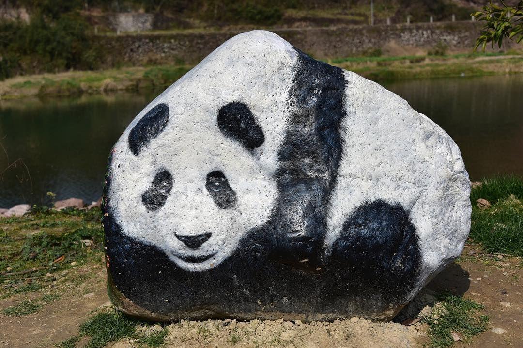 باندا مرسوم على صخرة في حديقة بمدينة ليشوي بمقاطعة تشيجيانغ في الصين وتعرض في الحديقة العديد من الصخور التي رسمت عليها صور حيو Panda Bear Animals Rock Hunting