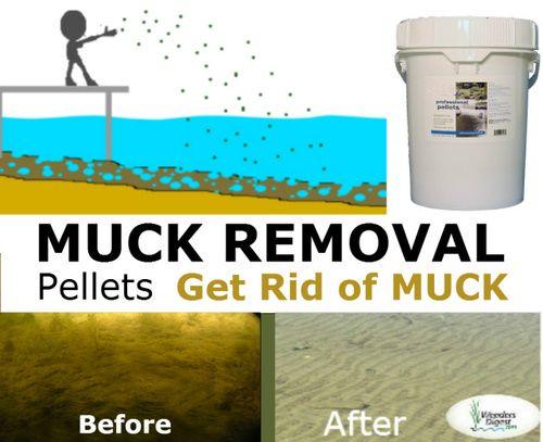 Lake Pond Sludge Remover Bacteria