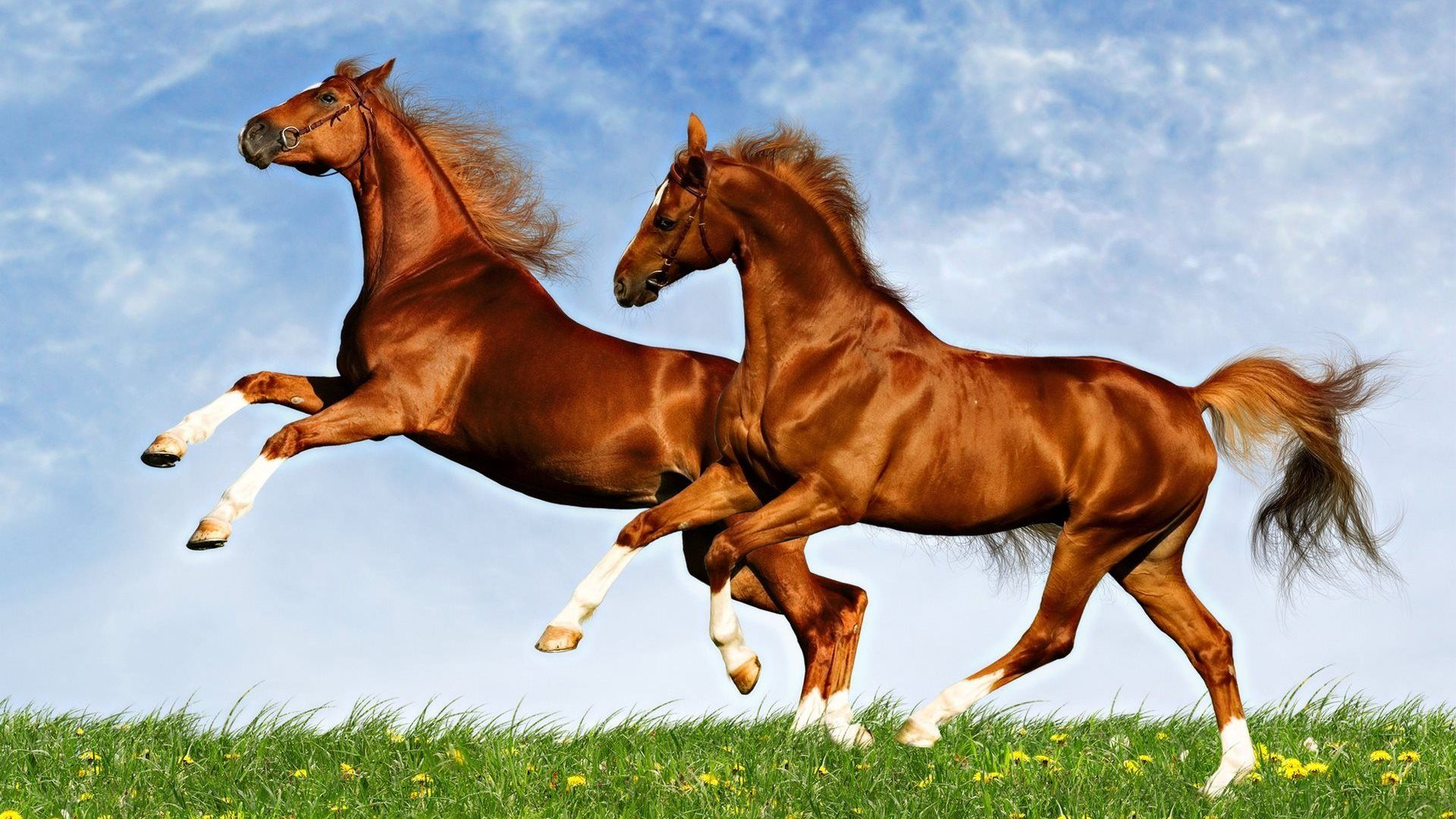 Download Wallpaper Horse Spring - 2dff071a8c2e004b46687f561f02ccca  Perfect Image Reference_356698.jpg