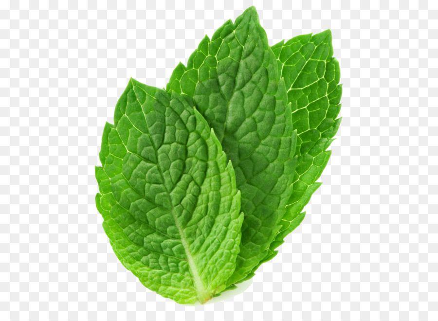 Tea Peppermint Mentha Spicata Mentha Arvensis Leaf Mint Png Png Is About Is About Plant Lemon Balm Leaf Herb Peppermint Tea Pe Desain Inspirasional Daun