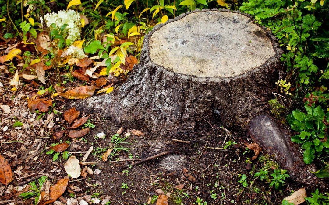 Hire Qualified Tree Surgeons For Professional Stump Grinding
