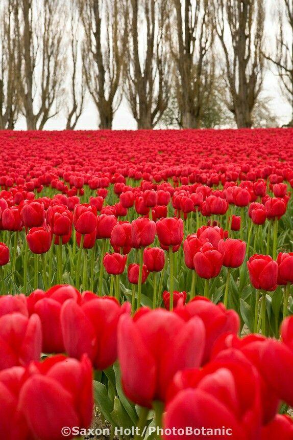 Primavera #Barilla en Momentos Extraordinarios porque en esta epoca podemos disfrutar de estos colores tan hermosos