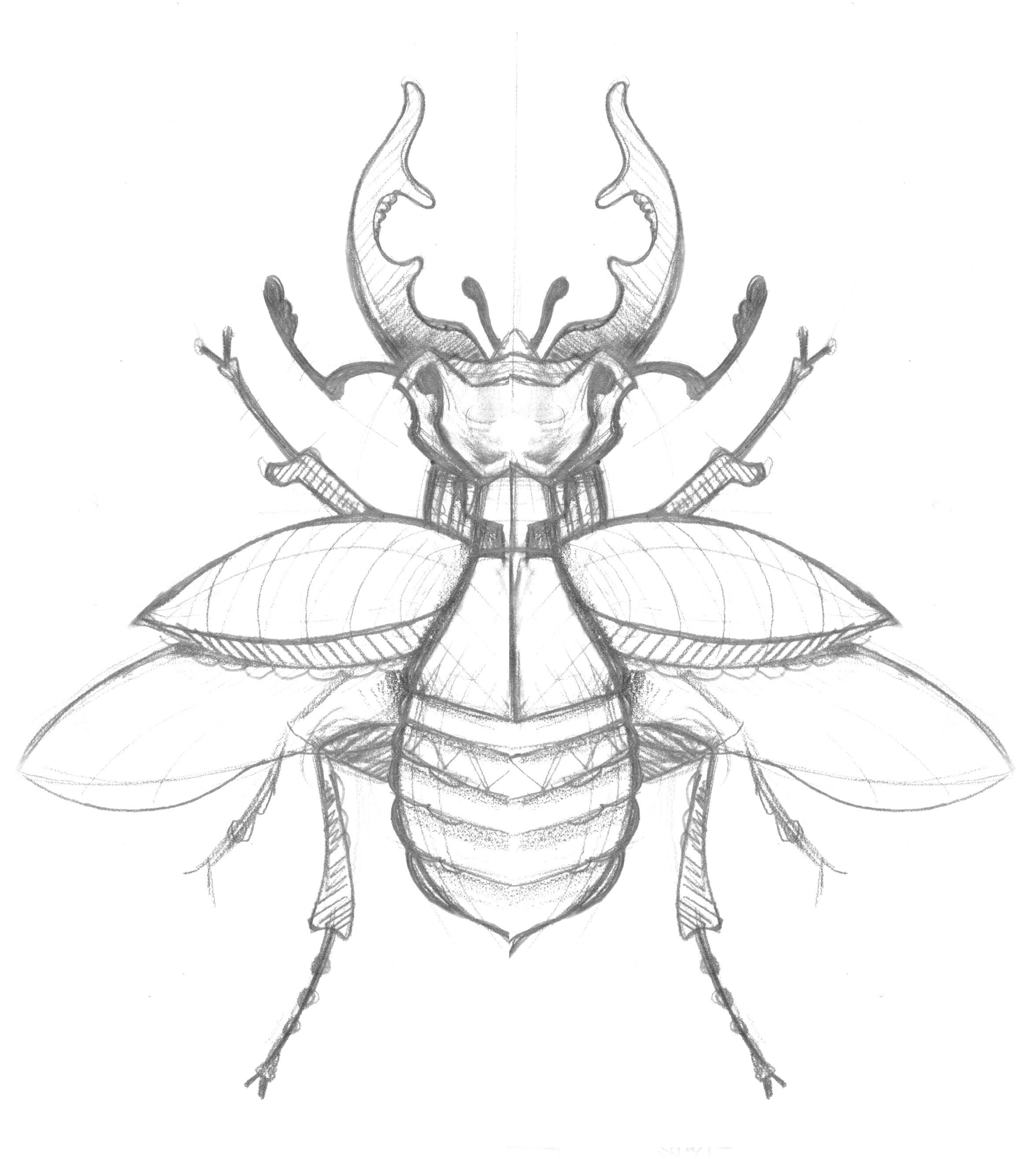 Image Result For Stag Beetle Pin