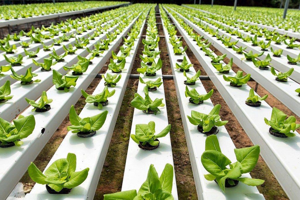 Implementan:Economía social solidaria, genera conocimientos de sustentabilidad ecológica, social y económica en Pymes - https://webadictos.com/2016/10/04/economia-social-solidaria/?utm_source=PN&utm_medium=Pinterest&utm_campaign=PN%2Bposts
