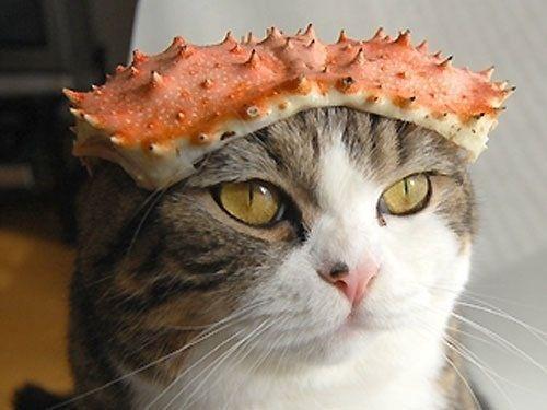 まとめでぃあ  【可愛すぎ】 猫の身を守るためのアーマーが、ア○ルーにしか見えない件wwwwwww(画像あり)