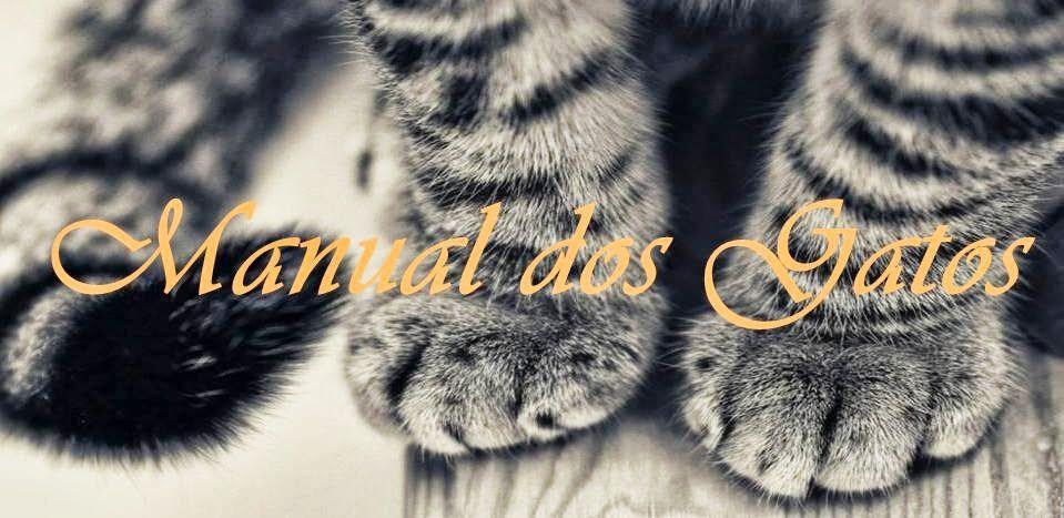Manual dos Gatos e Filhos: Quando o gato deita na caixa de areia