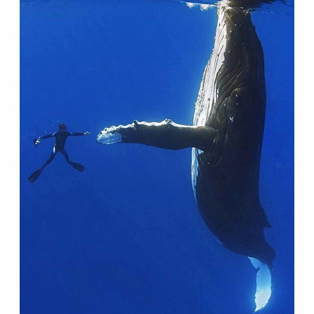 Pin by RezAkos on peace under pressure | Animals, Whale, Ocean